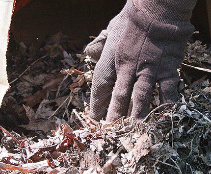 7 uses for fallen leaves